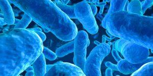 +microbiota+igen+biolab