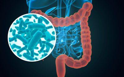 Gut microbiota-derived short-chain fatty acids promote prostate cancer growth via IGF-1 signaling