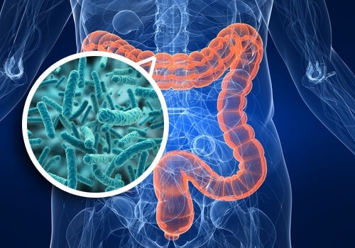 Gut bacteria help control healthy muscle contraction in the colon