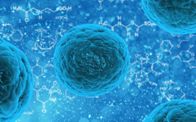 Human microbiota affects response to cancer therapy