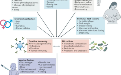 Modulation of immune responses to vaccination by the microbiota: implications and potential mechanisms