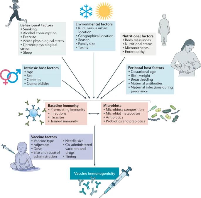 Modulación de las respuestas inmunitarias a la vacunación por parte de la microbiota: implicaciones y posibles mecanismos