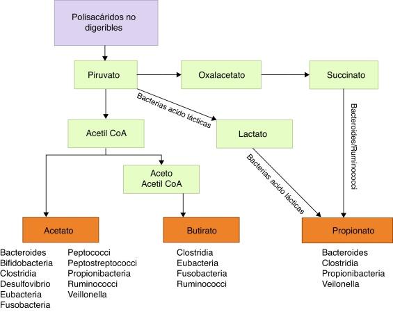 Papel de la microbiota intestinal en el desarrollo de la esclerosis múltiple